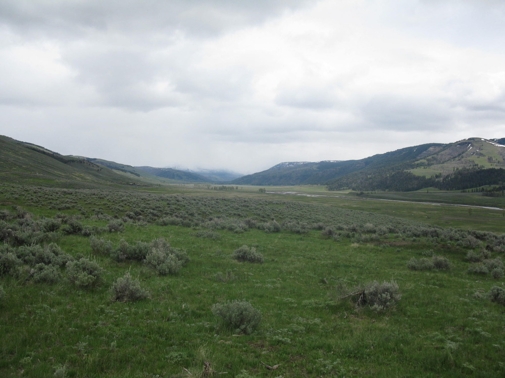 Lamar Valley above the gorge section (photo by Anne Jefferson)